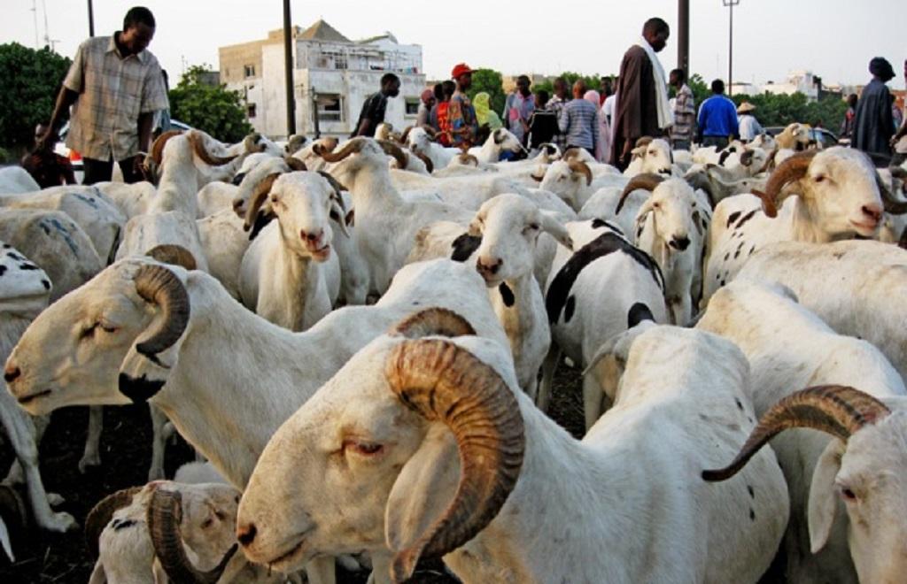 Tabaski (Fête du mouton) en Guinée: Le mouton trop cher…