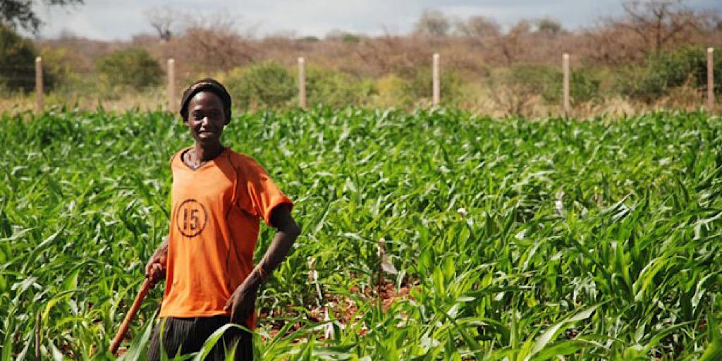 Afrique – changement climatique: Opter pour l'agriculture «intelligente»