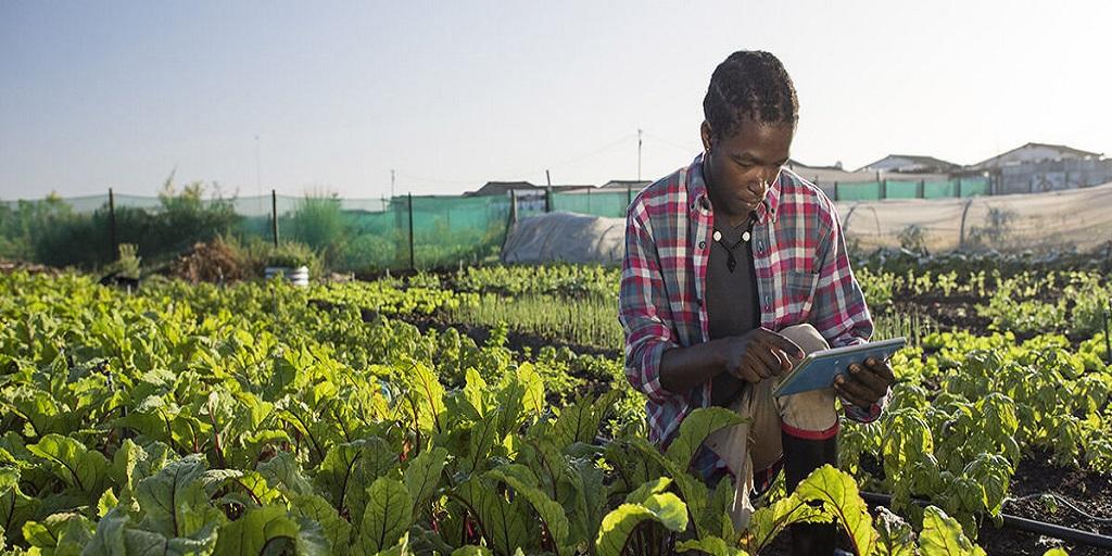 Côte d'Ivoire: Plateforme numérique au service des agriculteurs