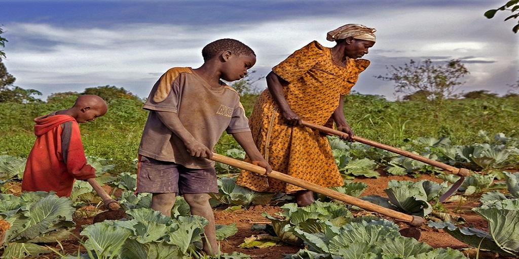 Changements climatiques : les agriculteurs en première ligne – le FIDA lutte contre les inégalités à l'occasion de la COP25