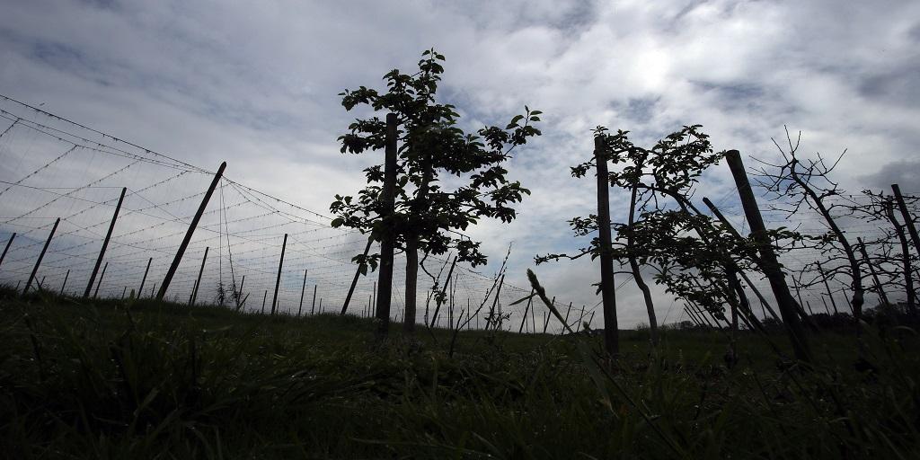 Congo : Plus de 150 millions d'euros pour valoriser le Bambou
